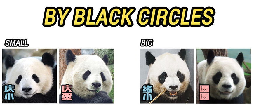 Identify pandas by black circles