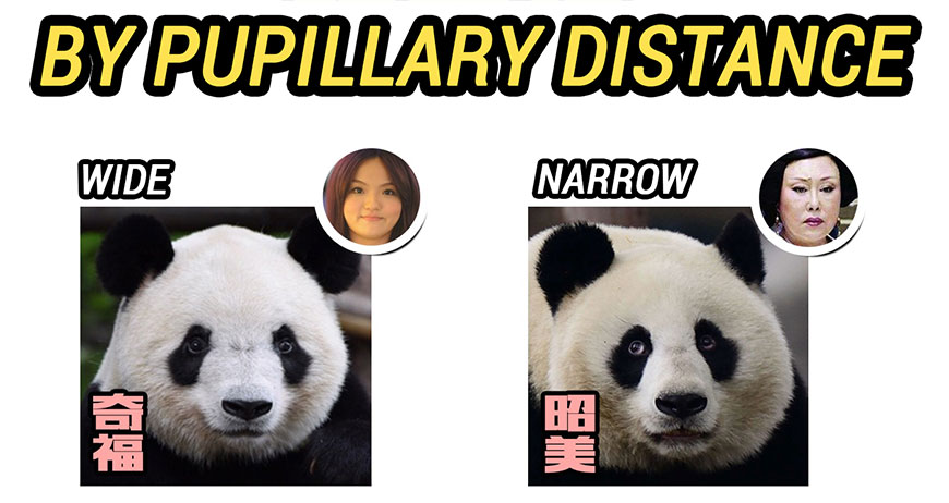 Identify pandas by pupillary distance