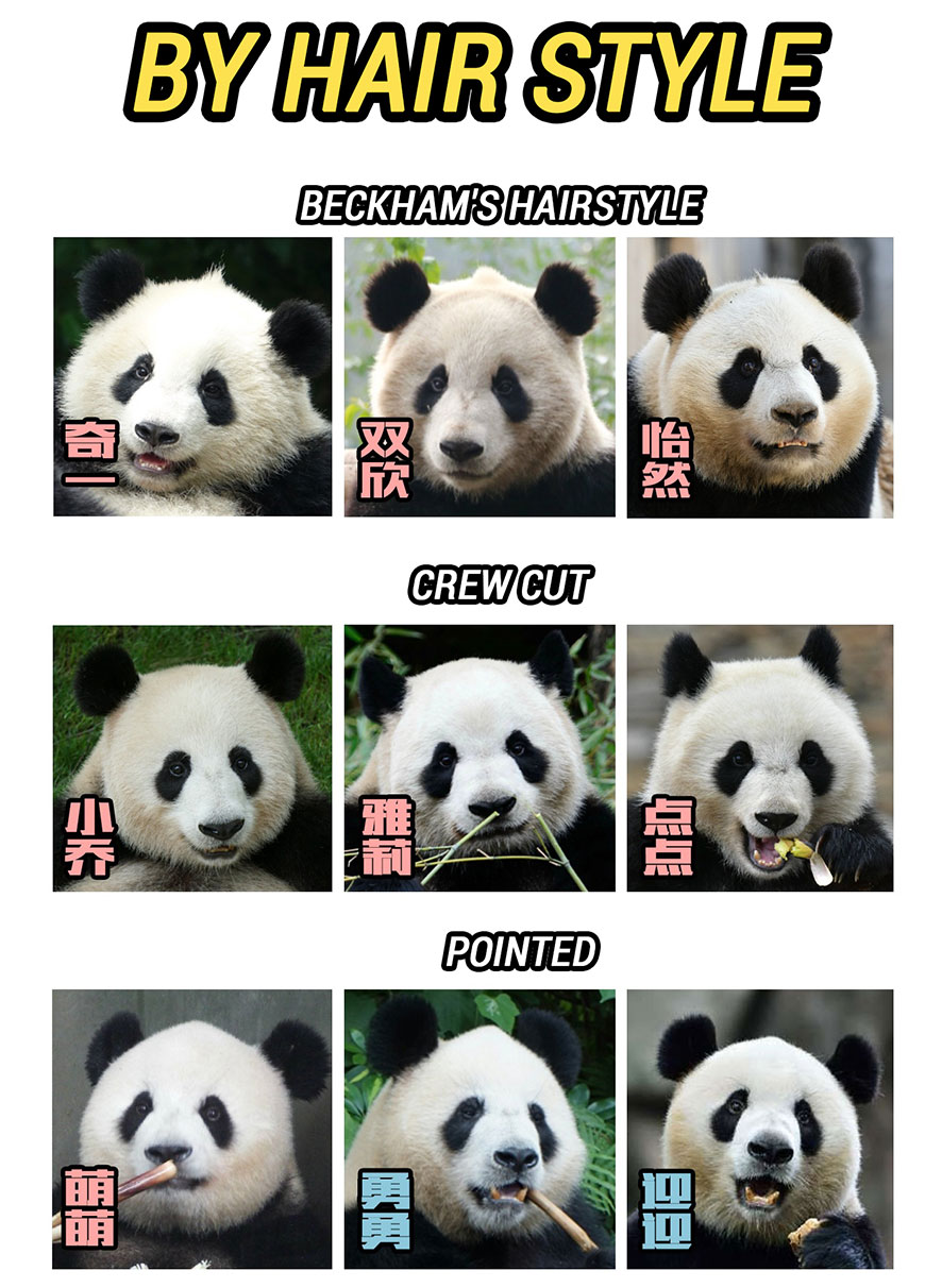 Identify pandas by hair styles